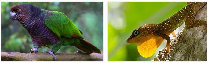 Dominica Animals