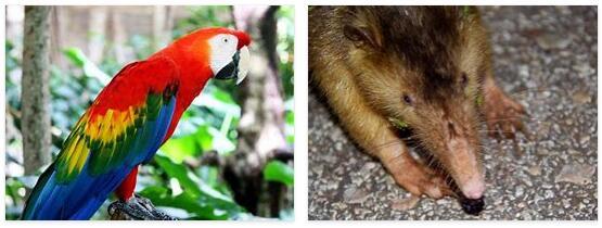 Dominican Republic Animals