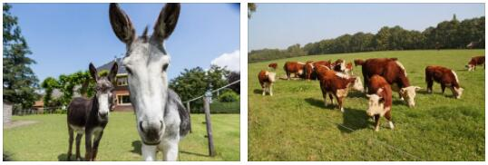 Netherlands Animals