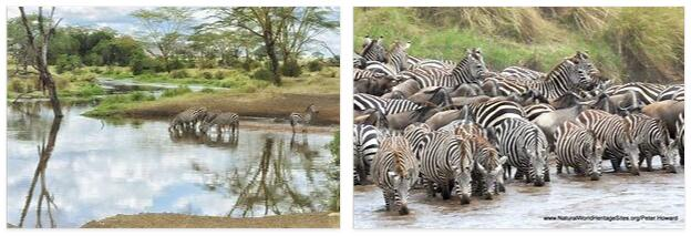 Serengeti National Park (World Heritage)